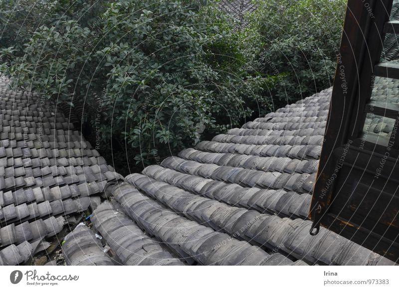 Stoßlüften Baum Xitang China Dorf Gebäude Architektur Innenhof Fenster Dach Dachrinne Dachziegel Holzfenster Fensterladen Denkmal alt grau grün Luft geschichtet