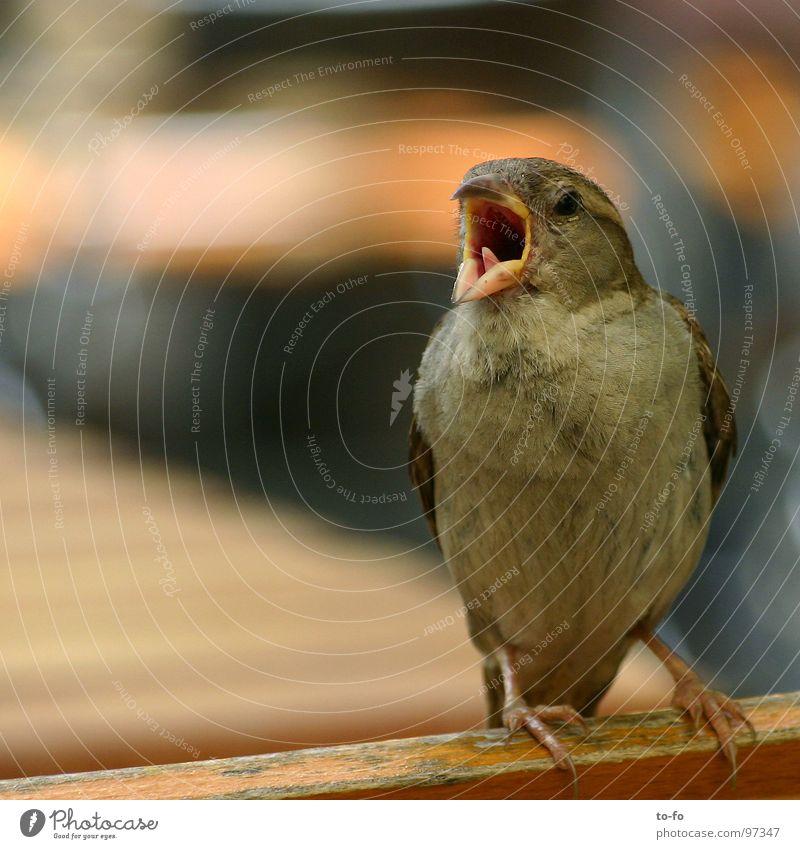 Spatz2 Farbfoto Außenaufnahme Textfreiraum links Tag Schwache Tiefenschärfe Gastronomie sprechen Tier Sommer Schönes Wetter Park Vogel Taube fliegen schreien