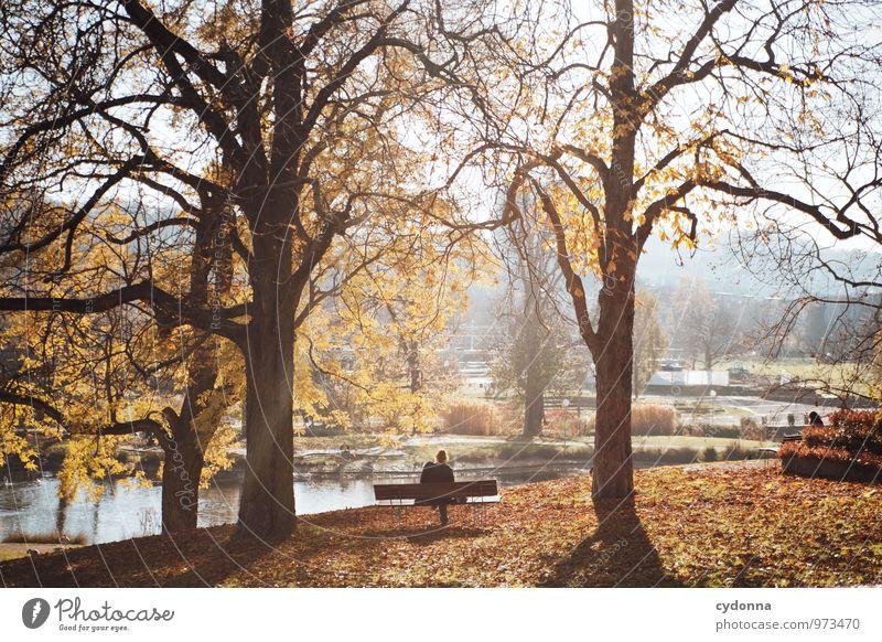An einem Herbstsonntag Mensch Natur Baum Erholung Einsamkeit Landschaft ruhig Umwelt Freiheit Zeit Park Lifestyle träumen Freizeit & Hobby Idylle