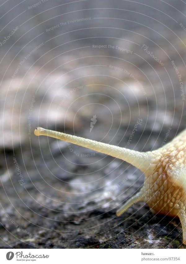 Wer hören will muss fühlen Fühler Asphalt krabbeln langsam Verkehrswege Gefühle Schnecke wer hören will muss fühlen Auge Blick berühren vortasten snail slow eye