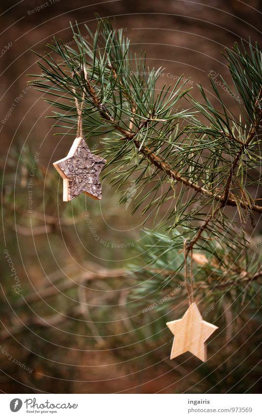 Zurück zur Natur Weihnachten & Advent Pflanze Baum Nadelbaum Ast Kiefer Kiefernnadeln Holz Stern (Symbol) hängen eckig stachelig braun grün Stimmung Vorfreude