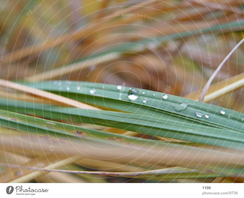 Grashalme Gras Wassertropfen Seil Halm