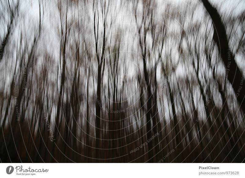 Black Forest Natur weiß Baum Einsamkeit Winter schwarz dunkel Wald Herbst wandern bedrohlich Landwirtschaft Verzweiflung Forstwirtschaft Nutzpflanze