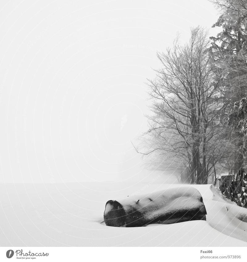 Winterschlaf weiß Baum Landschaft Einsamkeit ruhig dunkel Wald schwarz kalt Umwelt Schnee Holz Nebel Feld Eis