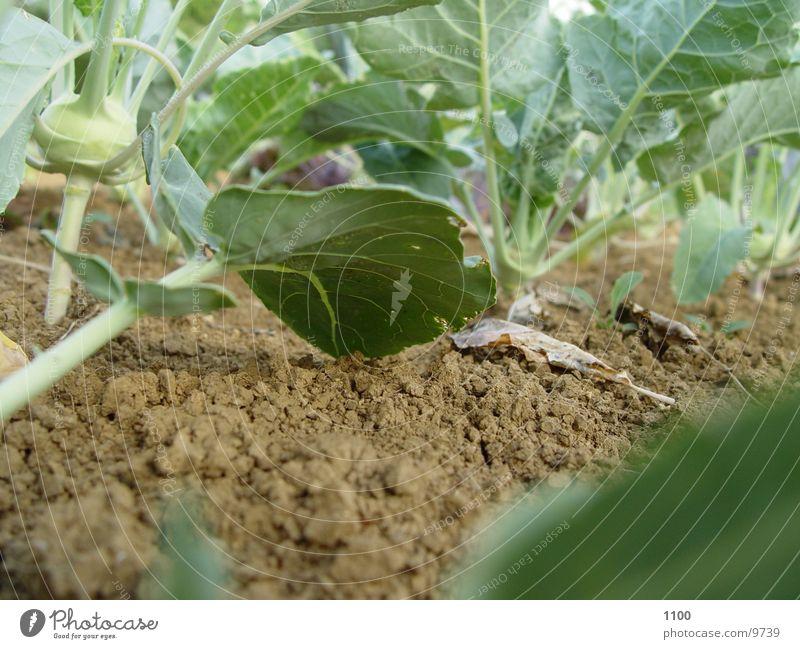 Gartenboden grün Blatt Erde Bodenbelag unten Gemüse