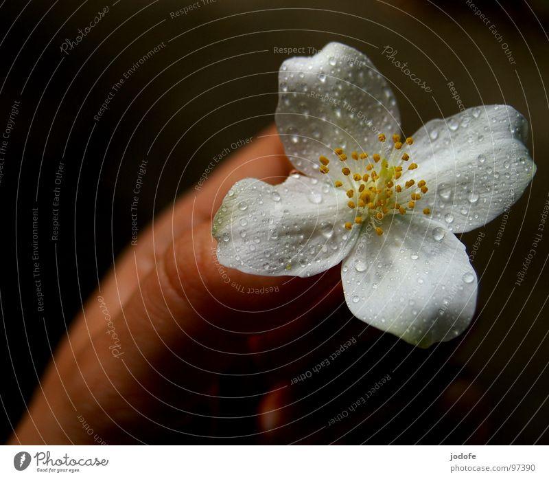 für dich... Pflanze schön Sommer Wasser weiß Hand Blume ruhig dunkel Blüte Frühling natürlich Lampe hell Regen Haut