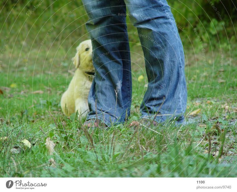 Bei Fuss grün Wiese Gras Hund Fuß Beine Welpe