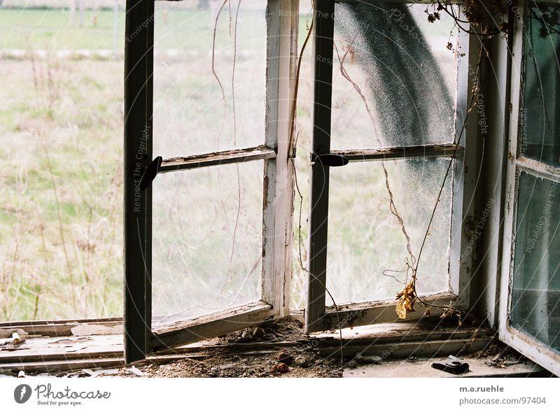 1000 windows Fenster Haus Einsamkeit Vergänglichkeit Verfall verfallen alte gebäude shrinking cities