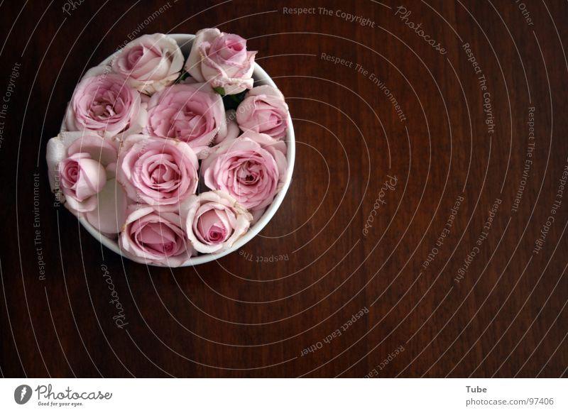 Rosarote Impressionen Holz braun Tisch Rose rosa grün weiß Blüte luftig leicht Haufen Streifen Blume Stillleben Composing dunkel beruhigend schwer Holzmehl