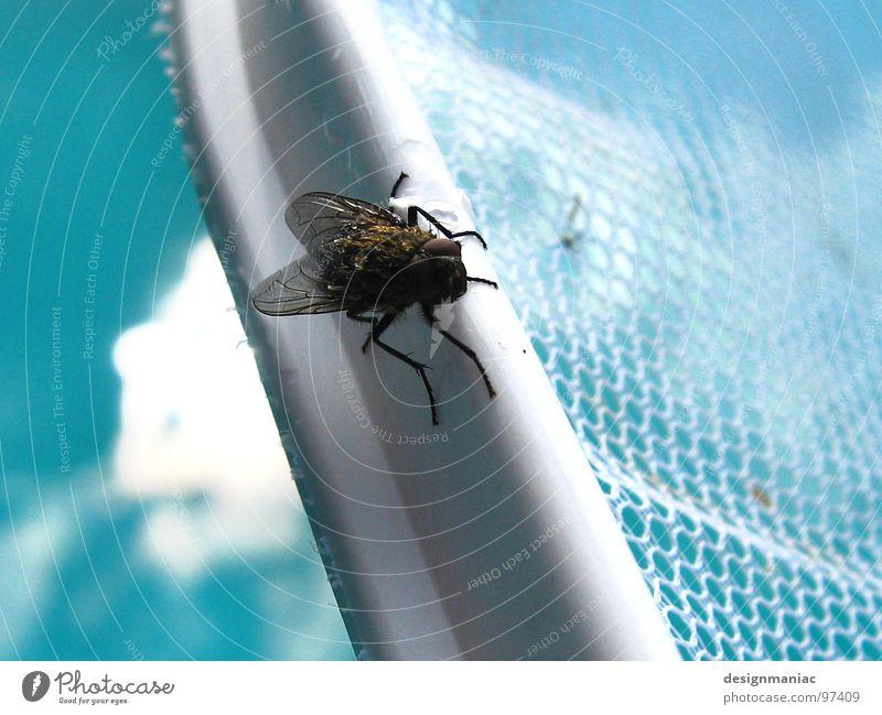 Designmaniac Rescue Service Schwimmbad hell-blau Insekt schwarz Unschärfe trocknen Sturmfrisur Fönfrisur klein groß Chlor Loch weiß gefangen Wellen verwebt