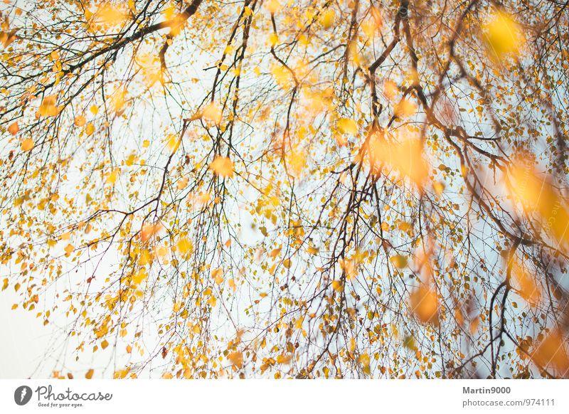 Goldener Herbstbaum Natur Sonne Baum Wald gelb Herbst hell Stimmung orange gold authentisch Warmherzigkeit Lebensfreude Romantik positiv Inspiration