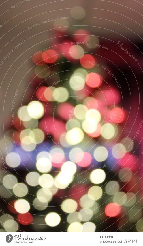 XMAS*** Weihnachten & Advent grün Farbe Baum rot Winter Schnee Stil Lifestyle Feste & Feiern Stimmung Design glänzend leuchten elegant modern