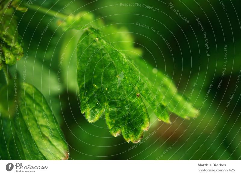 DURST Blatt Baum Blume Pflanze grün Beleuchtung schimmern Wachstum frisch dezent Unschärfe atmen Luft Balkon Sommer Herbst Jahreszeiten verdursten Desaster