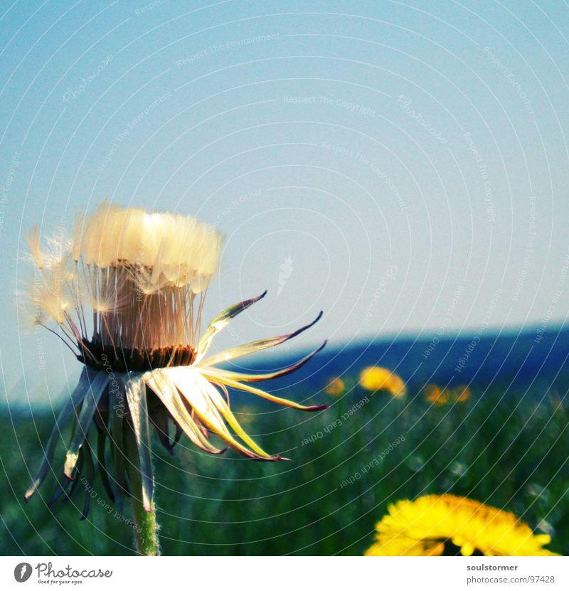 sun is shining! Löwenzahn Horizont Wiese Blume Unendlichkeit Sonnenstrahlen Frühling Makroaufnahme Nahaufnahme Ferne Himmel Berge u. Gebirge Samen fliegen
