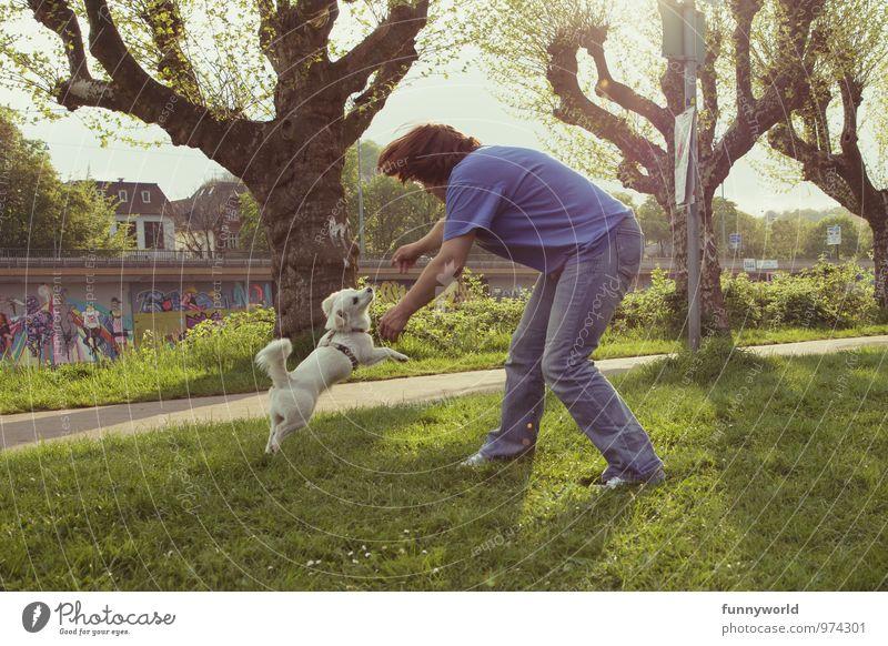play it Frau Erwachsene 1 Mensch 30-45 Jahre Hund Tier Fitness Jagd kämpfen Spielen Sport springen toben Freude weiß Fell Haustier Gassi gehen auslaufen