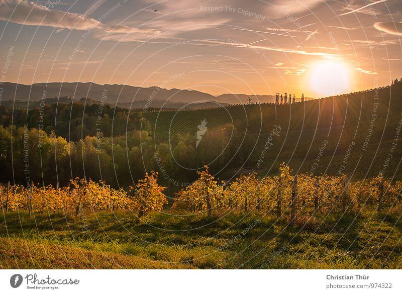 Sonnenuntergang im Herbst Natur Ferien & Urlaub & Reisen Pflanze Baum Erholung Landschaft ruhig Wolken Ferne Umwelt Gras Glück Freiheit Stimmung