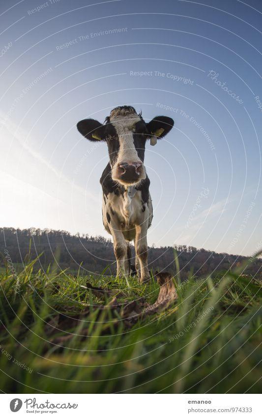 kuhgst du? Himmel Natur Ferien & Urlaub & Reisen Pflanze Landschaft Tier Berge u. Gebirge Wiese Gras Feld Tourismus Schilder & Markierungen stehen wandern
