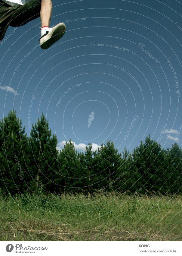 siebenmeilensneaker Himmel Pflanze Freude Wald springen Vogel hoch Luftverkehr Barriere Dynamik Abheben Turnschuh Botanik himmelblau Nadelbaum Leichtathletik