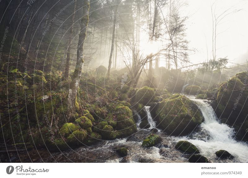 4 Elemente Natur Ferien & Urlaub & Reisen Pflanze grün Wasser Sonne Landschaft Wolken Wald Berge u. Gebirge Umwelt Herbst Felsen Wetter Luft Nebel