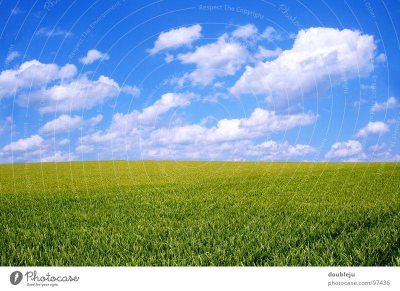 wolkenmeer und mehr Wolken Sommer Feld grün Gerste Himmel blau Landschaft Getreide Farbe