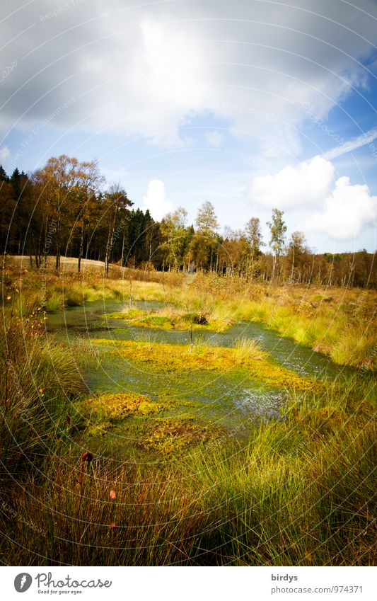 Hochmoor Natur Landschaft Pflanze Urelemente Wasser Himmel Wolken Sommer Herbst Gras Wald Moor Sumpf Teich natürlich wild Einsamkeit Idylle Naturschutzgebiet