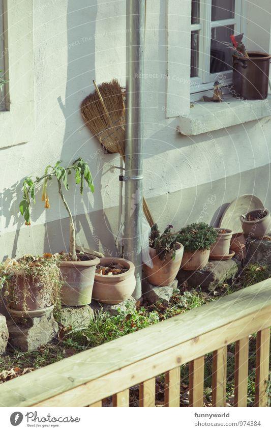 Kehrseite Freizeit & Hobby Häusliches Leben Wohnung Garten Schönes Wetter Topfpflanze Haus Einfamilienhaus Mauer Wand Fassade Fenster Fensterbrett Blumentopf
