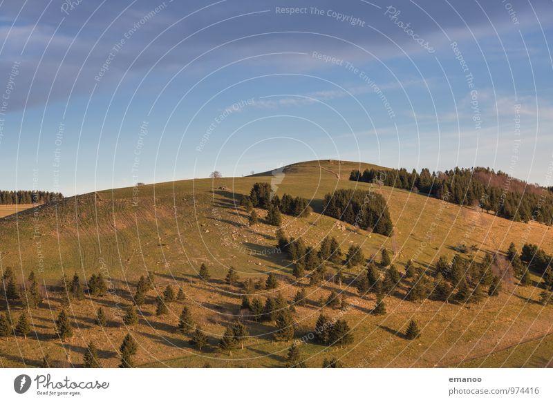 Schwarzwaldhügel Himmel Natur Ferien & Urlaub & Reisen blau Pflanze grün Baum Landschaft Ferne Wald Umwelt Berge u. Gebirge Herbst Wiese Gras Freiheit