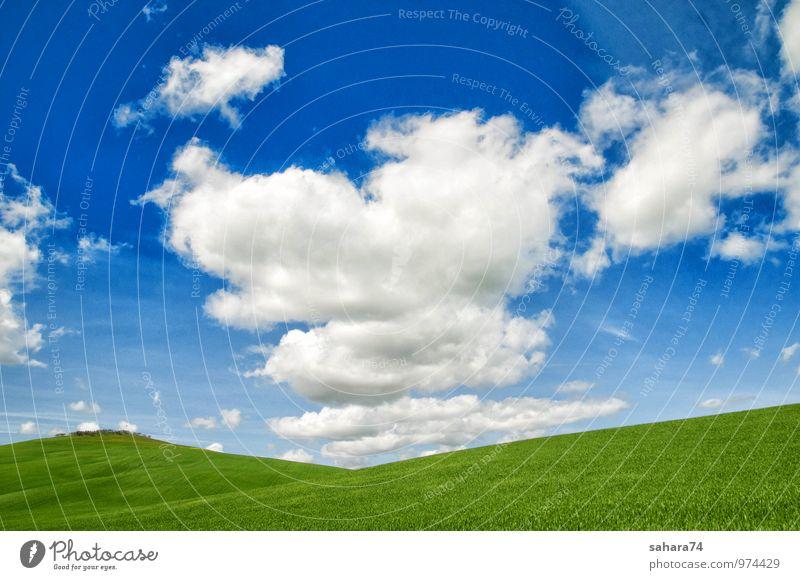 Toskana, ländliche Landschaft Natur Pflanze Urelemente Erde Himmel Wolkenloser Himmel Gewitterwolken Horizont Sonne Sonnenaufgang Sonnenuntergang Sonnenlicht