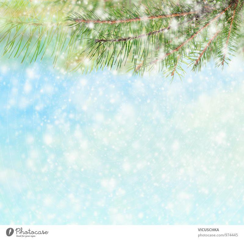 Winter Hintergrund mit Tanenbaum und Schnee Himmel Natur Weihnachten & Advent Winter Schnee Stil Hintergrundbild Schneefall Eis Design Frost Zweig Tanne Hagel