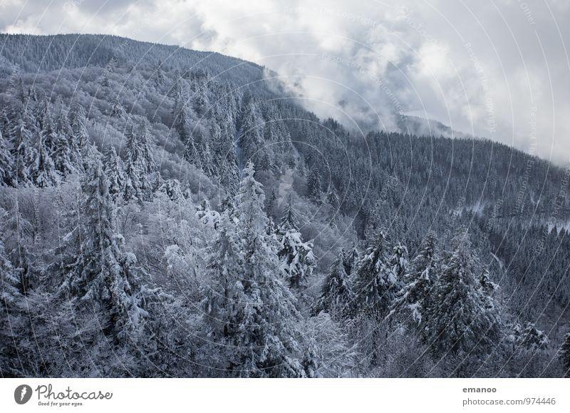 weisser Schwarzwald Himmel Natur Ferien & Urlaub & Reisen Pflanze weiß Baum Landschaft Wolken Winter Wald kalt Umwelt Berge u. Gebirge Schnee Schneefall Luft