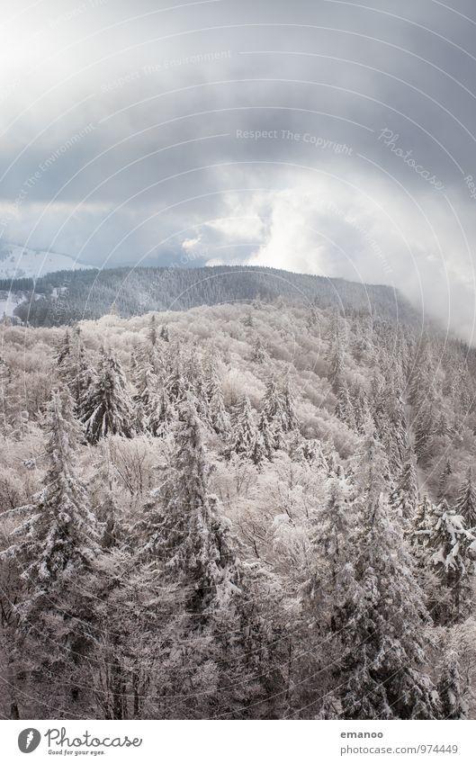 Winter im Wald Himmel Natur Ferien & Urlaub & Reisen Pflanze weiß Baum Landschaft Wolken Ferne kalt Umwelt Berge u. Gebirge Schnee Schneefall