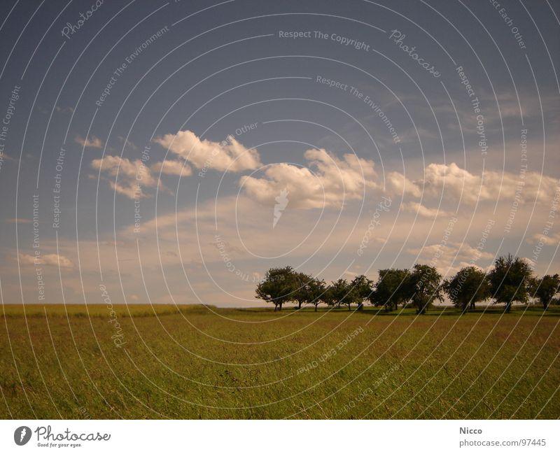 Sommer! wandern Physik Warmes Licht Feld Landwirtschaft Wolken Wohlgefühl angenehm Stimmung Morgen Abend himmelblau Heimat grün gelb Baum Setzling Apfelbaum