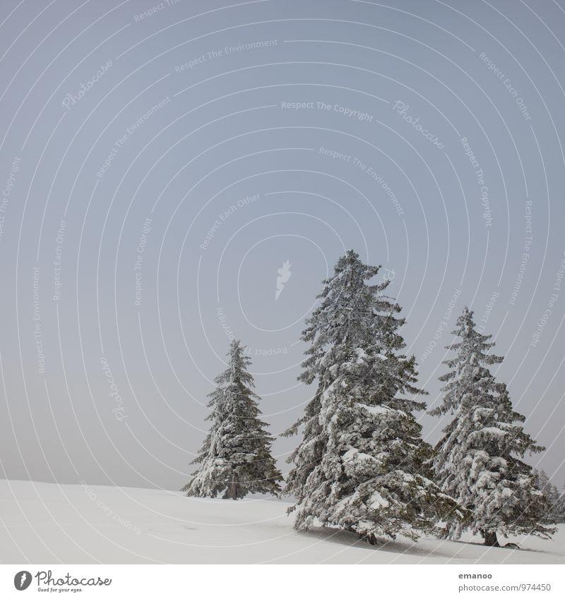 die 3 Weihnachtsbäume Himmel Natur Ferien & Urlaub & Reisen Pflanze weiß Baum Landschaft Winter kalt Berge u. Gebirge Schnee Feste & Feiern Eis Wetter Nebel