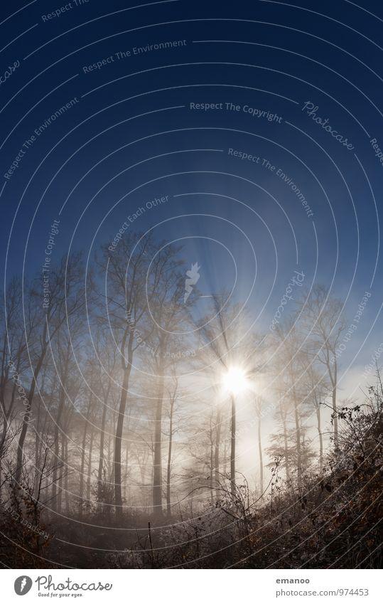Nebelwaldsonne Ferien & Urlaub & Reisen Ausflug Berge u. Gebirge Umwelt Natur Landschaft Pflanze Luft Wasser Himmel Sonne Frühling Herbst Klima Wetter Baum Wald
