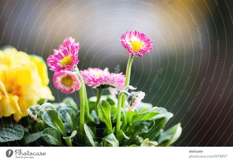 Flowers III Natur Pflanze Tier Blume Blatt Blüte Garten Blühend Wachstum Duft schön mehrfarbig gelb grün rosa weiß Gänseblümchen Duftveilchen Freisteller
