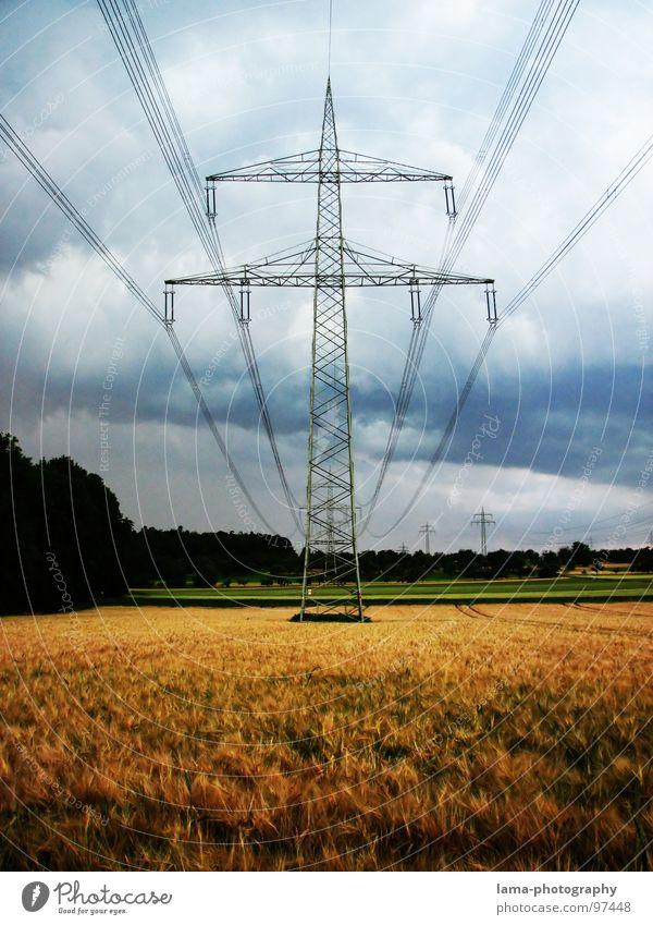 Field of Gold Natur grün Baum Wolken Ferne Wiese kalt Herbst Gras Wege & Pfade Regen Wind Feld gold nass Elektrizität