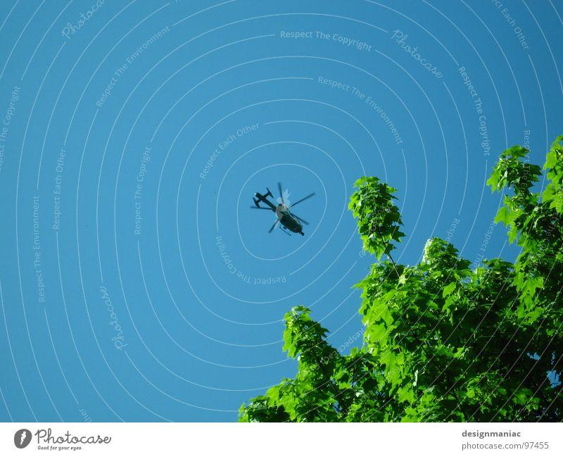 Keine Fliege. Biene beim Honig sammeln. Himmel blau grün Baum Blatt schwarz oben klein warten hoch groß frei Flugzeug Industrie Klarheit Mitte
