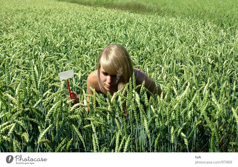 Komm raus! Frau Natur Jugendliche grün Tier Ferne Tod Haare & Frisuren Feld fliegen groß Suche Insekt nah Jagd drehen