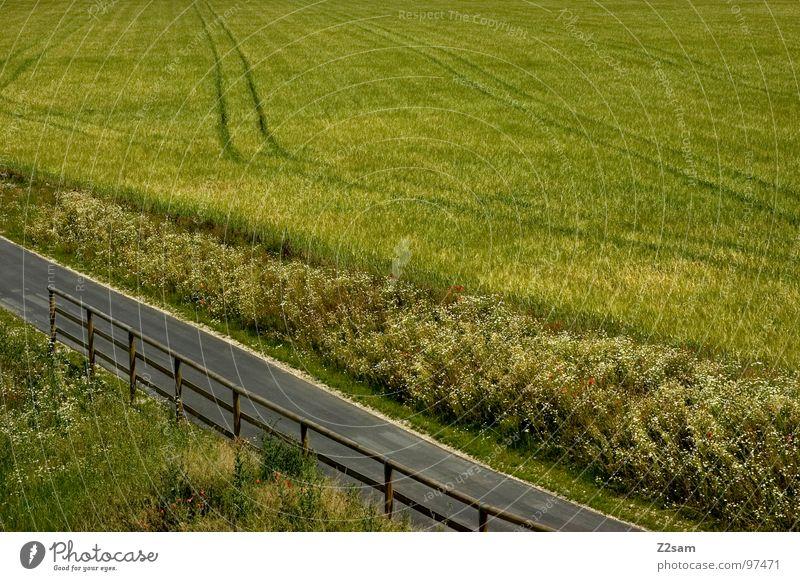 feld-weg Natur grün Sommer Straße Gras Holz Wege & Pfade Linie Feld Beton Ernte Fußweg Baumstamm Korn Geländer Teer