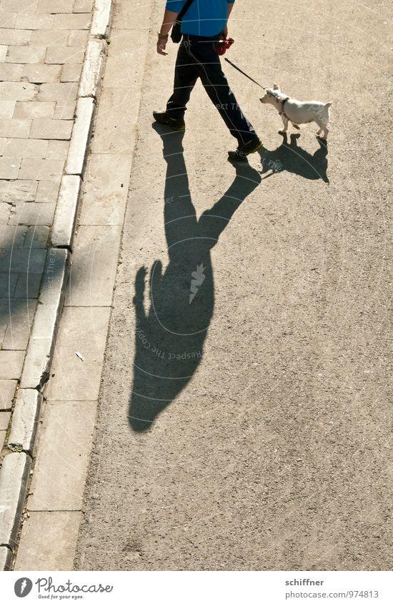 Belgisches Pittbullherrchen Mensch maskulin Mann Erwachsene 1 Tier Haustier Hund gehen Gassi gehen Spaziergang hinterherziehend unlustig Straßenbelag