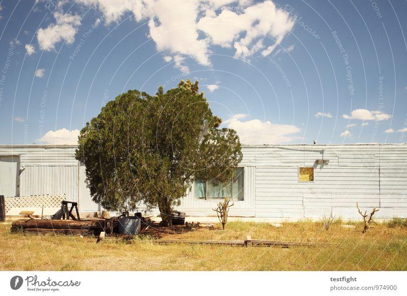baum Umwelt Natur Himmel Wolken Sonne Sonnenlicht Schönes Wetter Baum Haus Einfamilienhaus Hütte Bauwerk Gebäude Architektur Verfall Vergangenheit