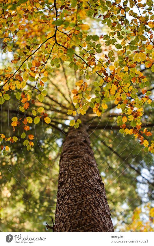 Baum - Herbst Natur Pflanze grün Blatt Tier Wald Umwelt gelb Traurigkeit Holz Wachstum gold Ast Vergänglichkeit