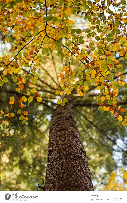 Baum - Herbst Umwelt Natur Pflanze Tier Blatt Grünpflanze Wald Wachstum gelb gold grün Schutz Romantik Hoffnung Traurigkeit Verfall Vergänglichkeit verlieren