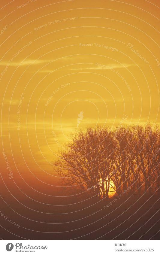 Morgennebel, Sonnenaufgang Himmel Natur Baum Landschaft Wolken Wald gelb Wärme Herbst Zeit braun orange Feld Kraft Nebel
