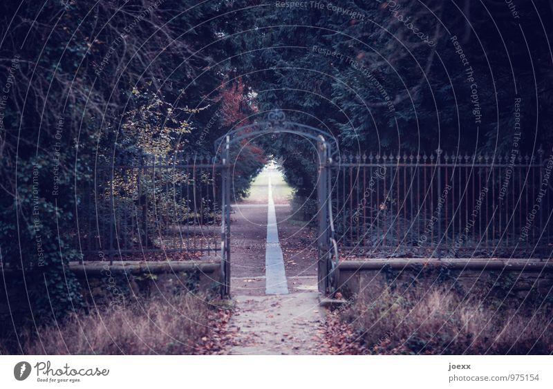 Andererseits. alt grün schön Baum Landschaft ruhig dunkel Wald Wand Wege & Pfade Religion & Glaube Mauer Tod braun Linie träumen