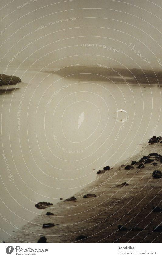 real as life Natur Wasser Erholung Stein See Sand Luft Vogel Nebel Fluss Bach Angeln fließen Brandung Reiher Silberreiher