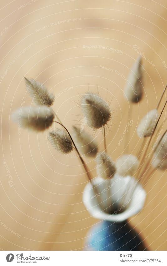 Souvenir aus der Bretagne Stil Design Meditation Wohnung Innenarchitektur Dekoration & Verzierung Dielenboden Gras Trockenblume Vase Holz ästhetisch hell