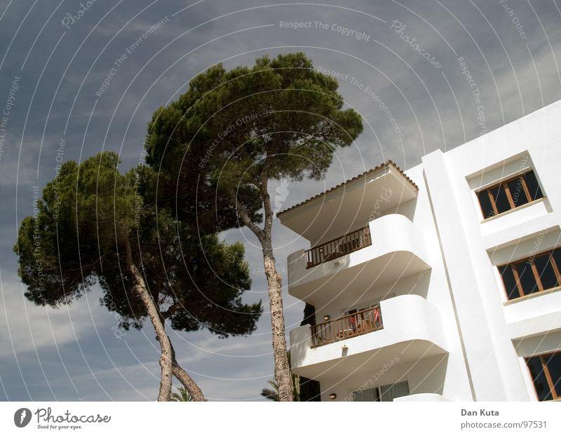 Auffallend ansteigend Himmel Ferien & Urlaub & Reisen weiß Sommer Baum Haus Wand Wärme Holz Architektur Freiheit Stein verrückt modern Schwimmbad streichen
