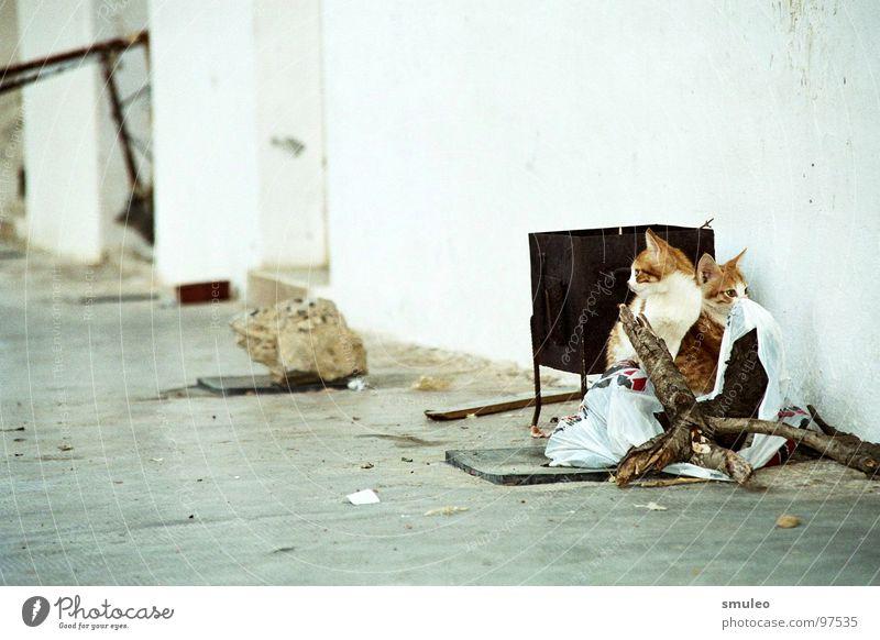 Katzen im Hinterhof Meer Ferien & Urlaub & Reisen Arme Insel Verkehrswege Griechenland Ghetto