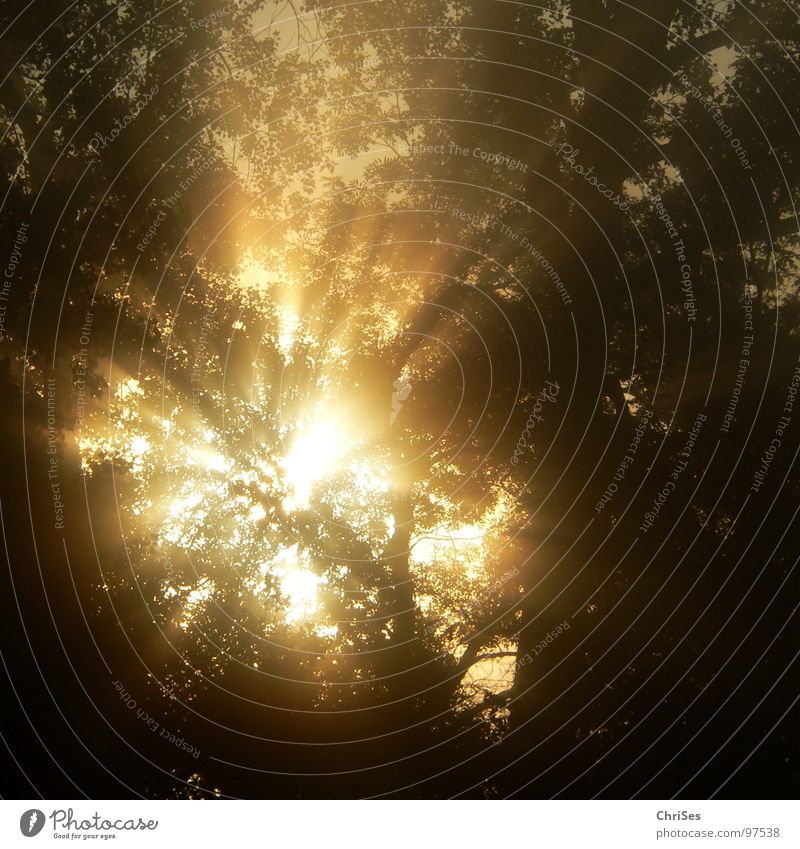 morgens um 6.00 Himmel Baum Sonne Sommer schwarz Landschaft Wärme Beleuchtung gold Nebel Romantik Physik Sonnenaufgang aufwachen Nordwalde